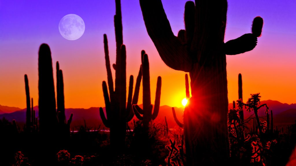 Arizona Desert Sunset Cactus