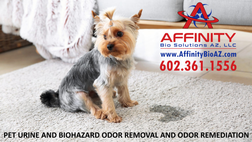 Goodyear Arizona Odor Removal and Odor Remediation Biohazard cleanup and bad odor cleaning