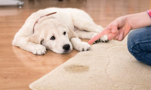 Pet odor urine stain odor removal